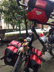 incontri, un lama in bicicletta